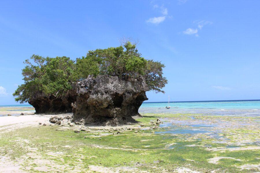 Un arbre au centre de la mer, de la végétation et du sable blanc en Tanzanie