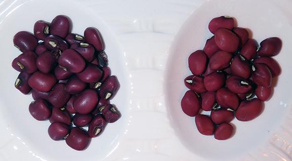 Un plat creux avec des haricots rouges