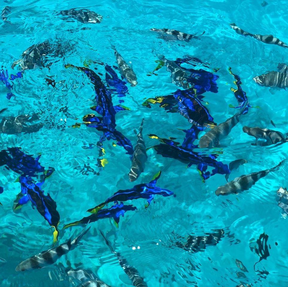 Pleins de poissons multicolores à Zanzibar