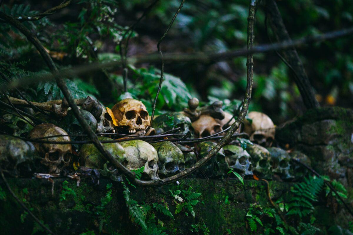 Des crânes empilés sous un arbre Banyan
