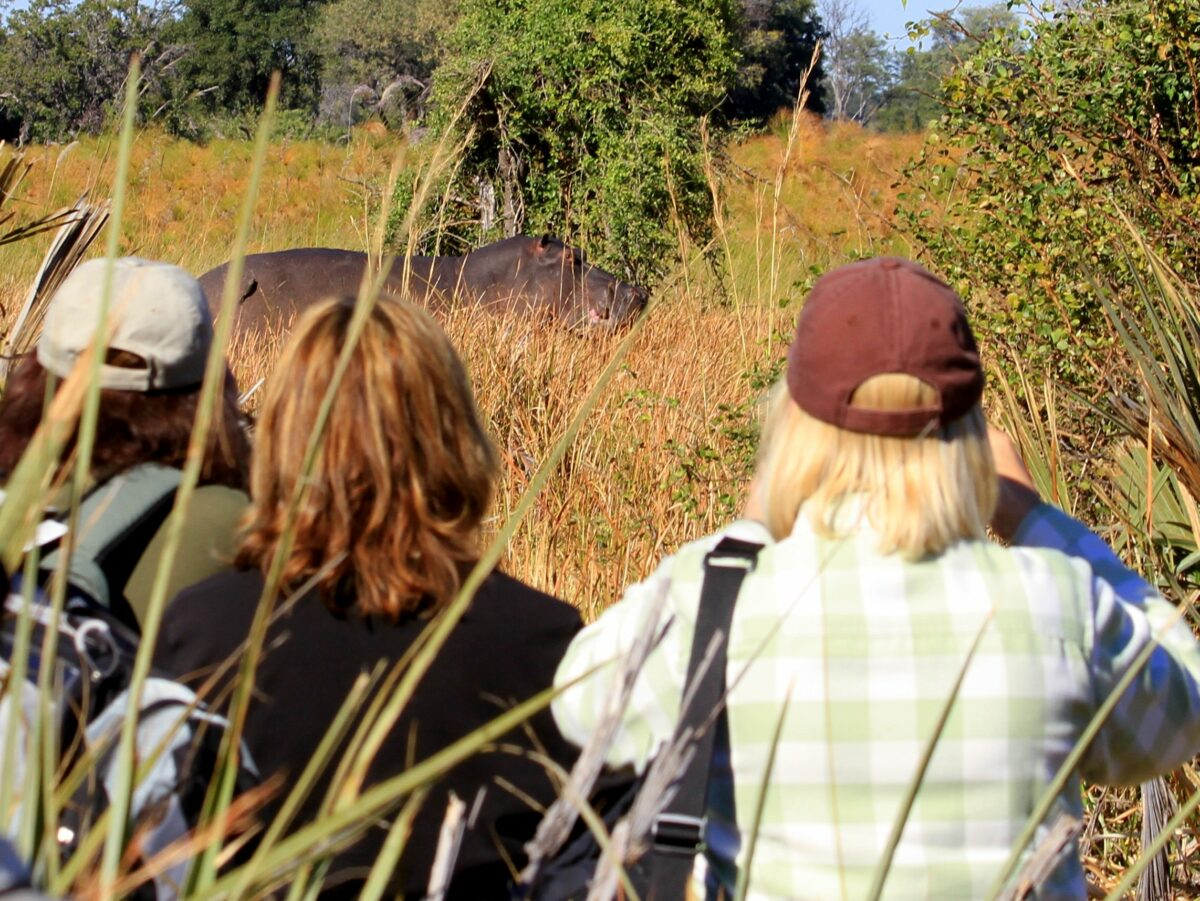 Un safari à pied pour voir la faune et la nature