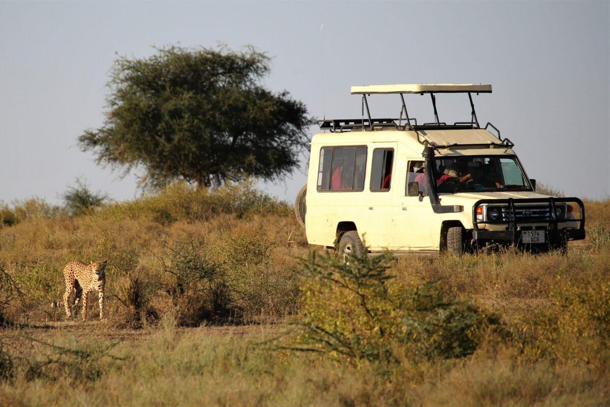 Un safari avec un guide en Tanzanie