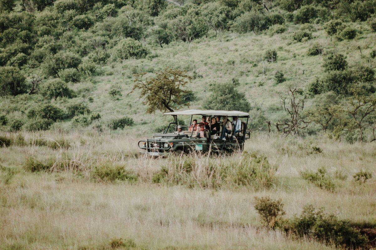 Un safari avec un guide local qualifié