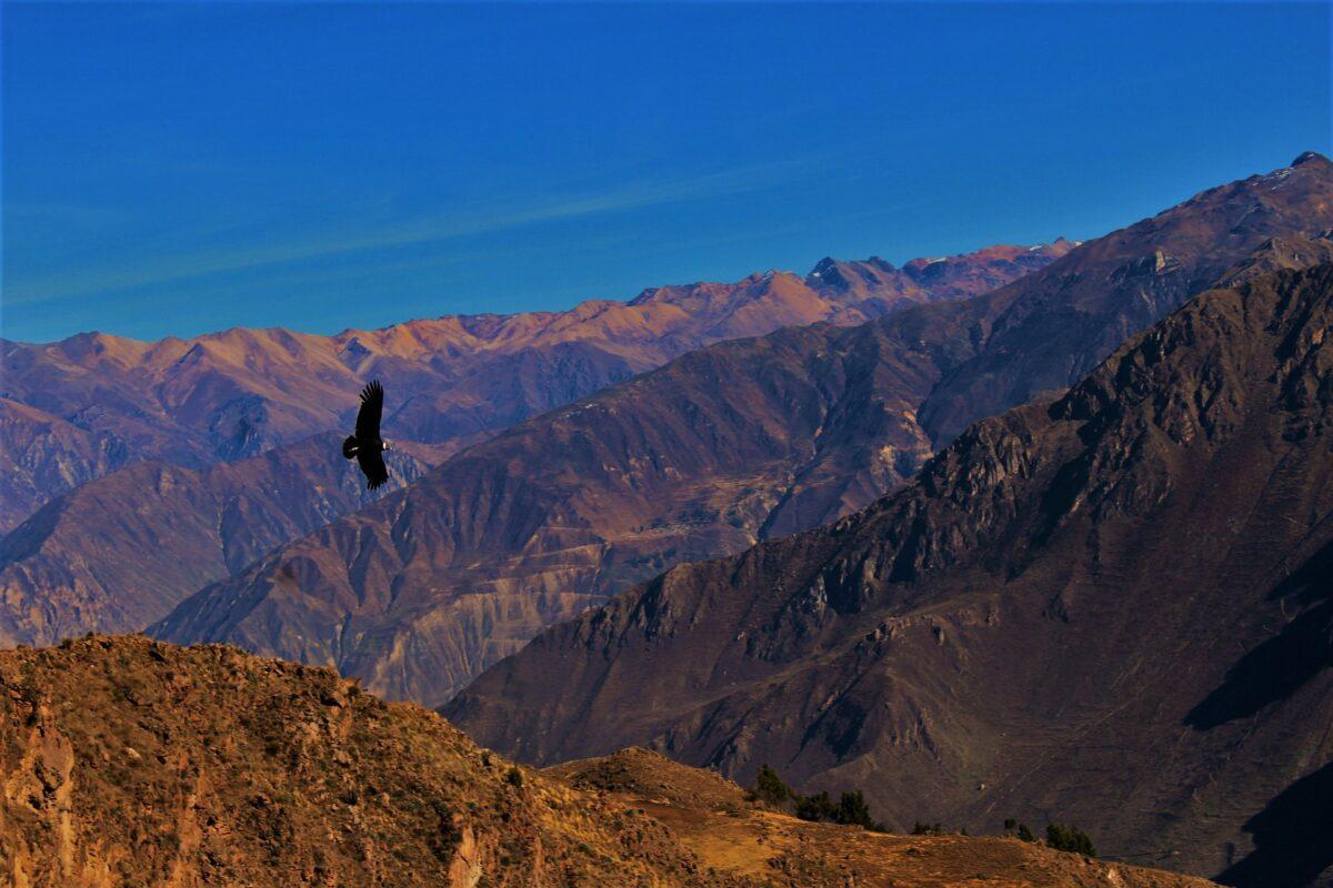 Le canyon de Colca à Arequipa