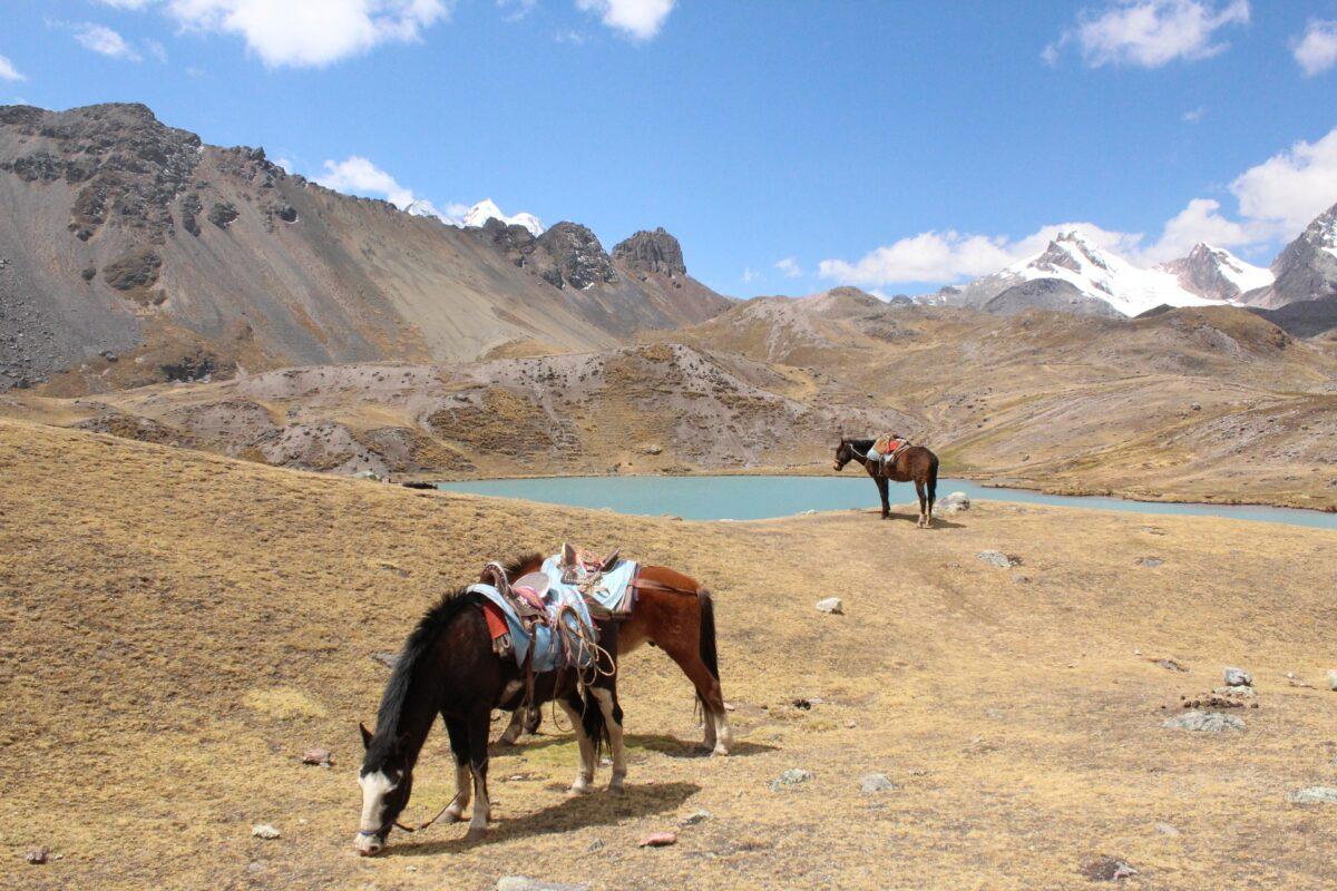 Un paysage avec des chevaux