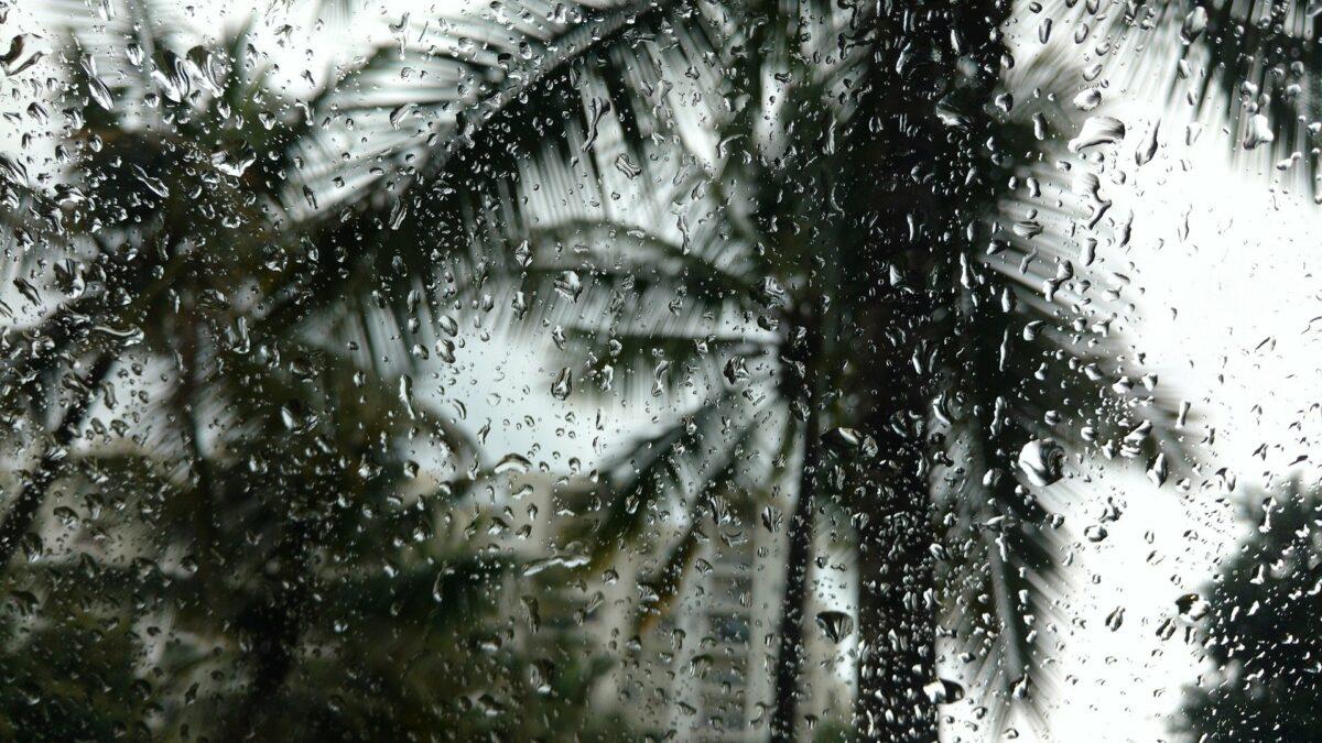 Une pluie tropicale