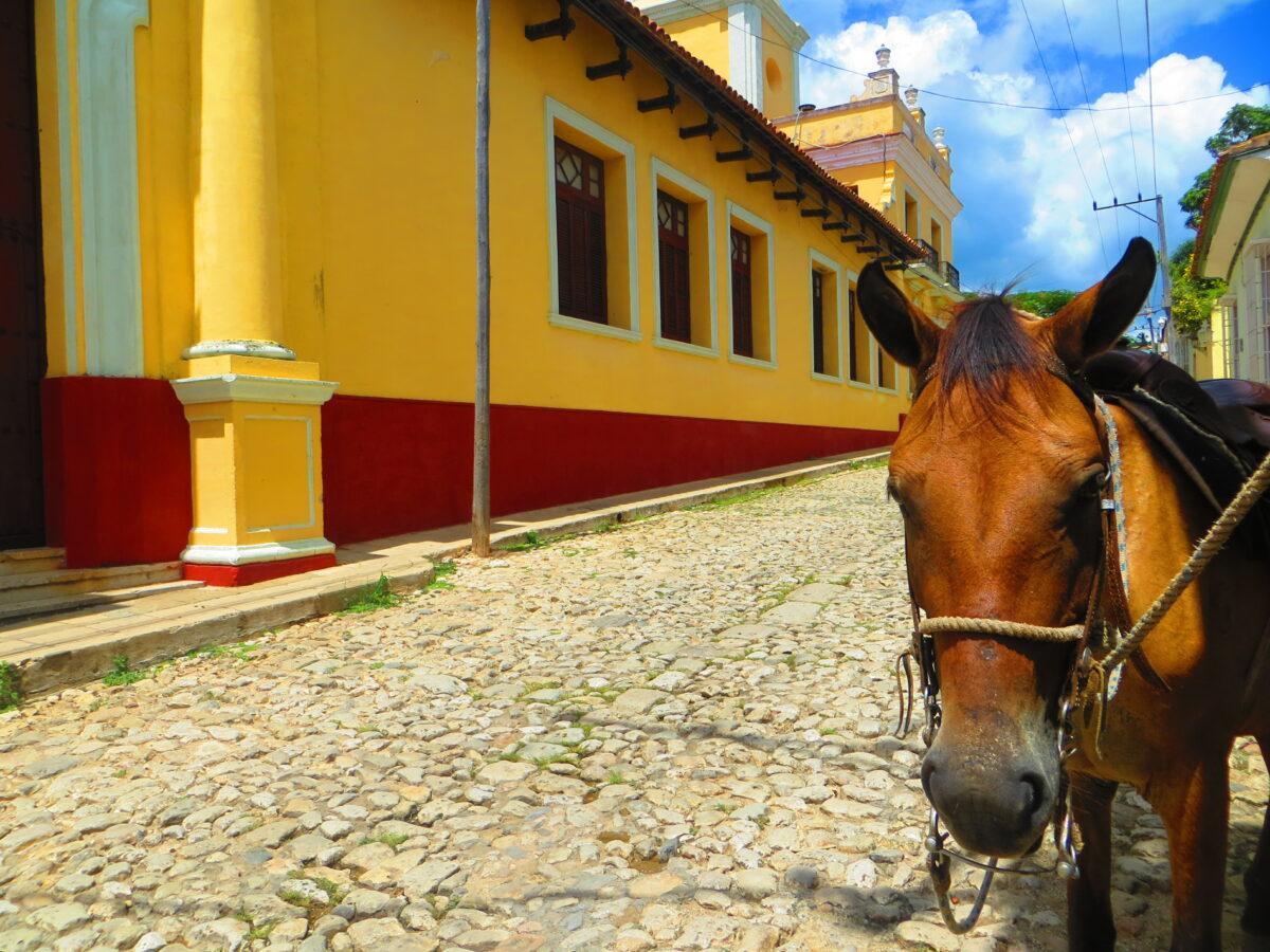 promenade à cuba avec un cheval avec Roberto