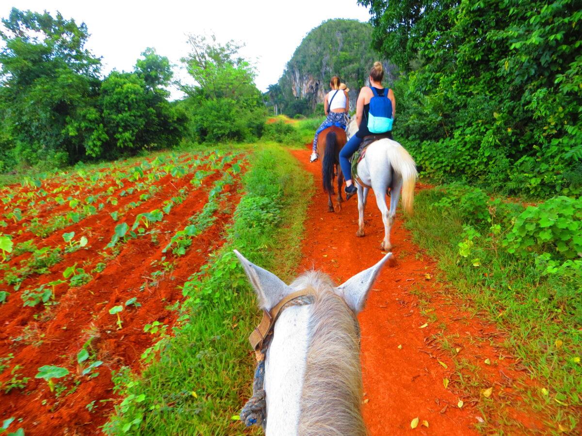 promenade à cheval dans la campagne de cuba avec Roberto
