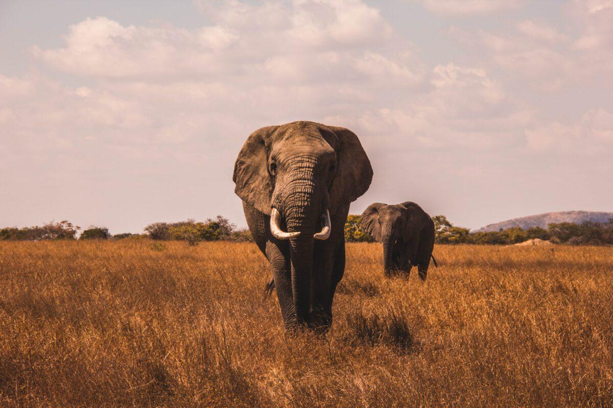 afrique du sud 15 jours kruger elephant