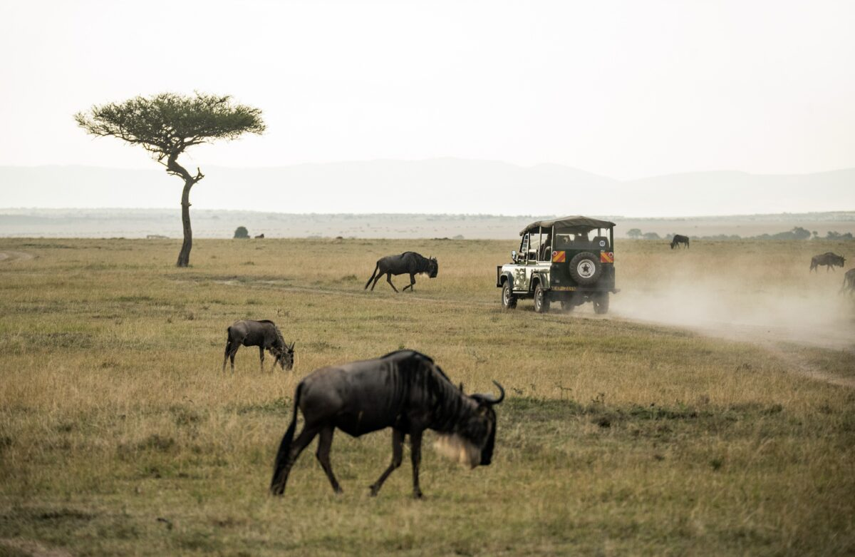 safari kruger soguide