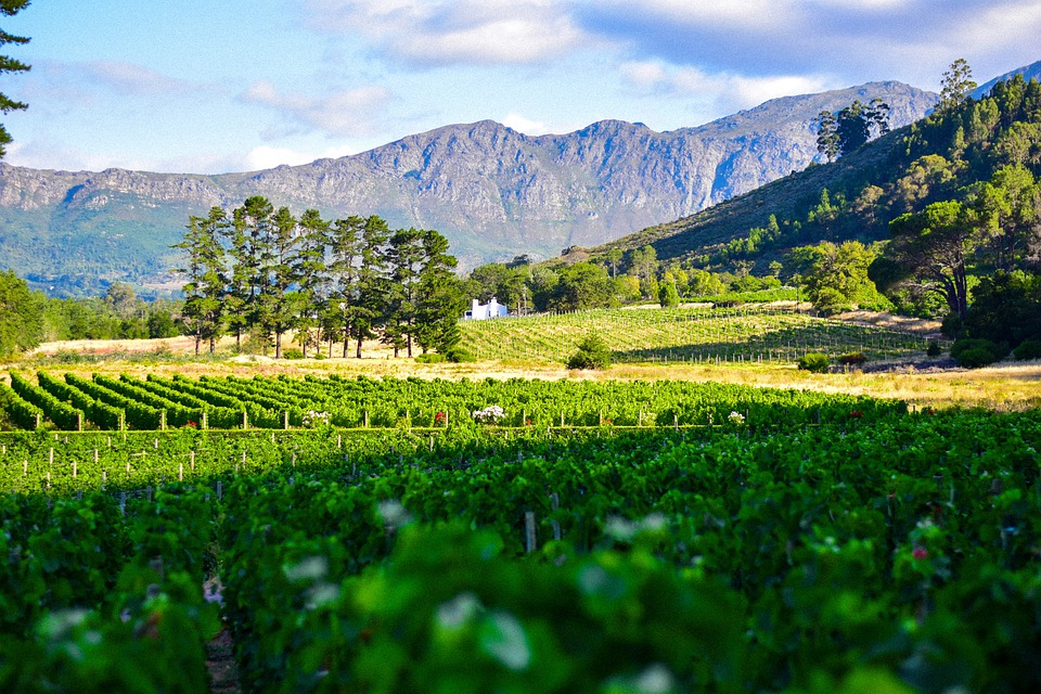 Winelands south africa blog soguide top